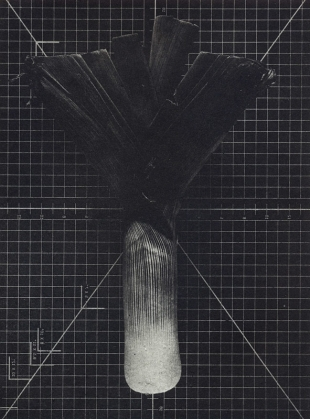 Leek, Photogravure, 2000