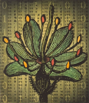 Spring Loaded – Flower, Photogravure & Collagraph with hand colouring, 2012
