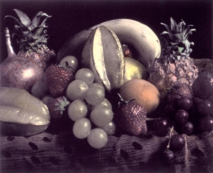 Still Life, Colour Collotype, 2005