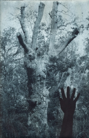 Tree & Hand, Photogravure, 2000